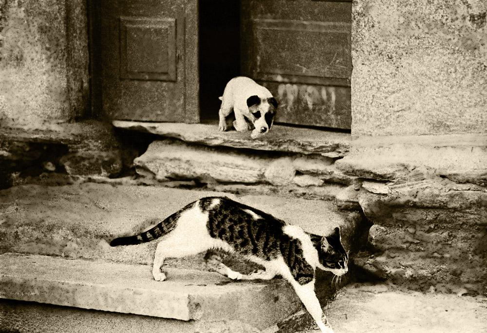 Como el perro y el gato-Año 1.965