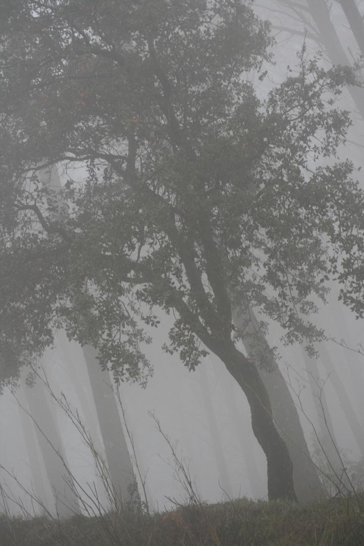 Como si fuese en blanco y negro por la niebla