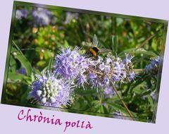comp_Kreta-2012_07_02-06_49_30-mum-f