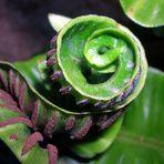 Complessità di una pianta.