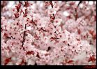 Complete Blossom