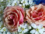 Composition printanière parfumée   --   Roses, oranger du Mexique  (Choisya ternata)