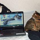 Computerkatze