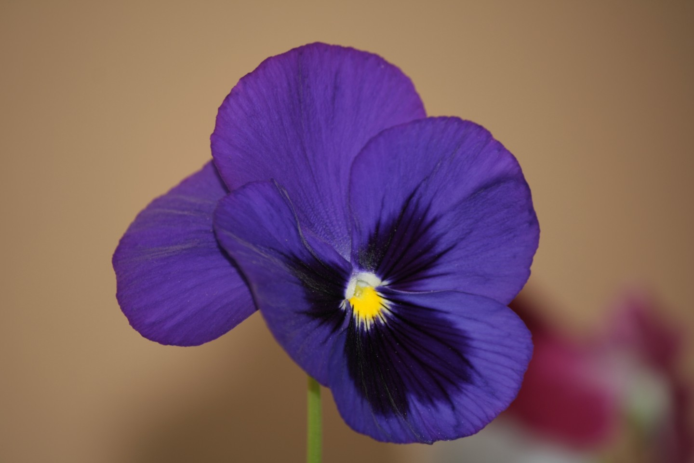 comunque un bel fiore...