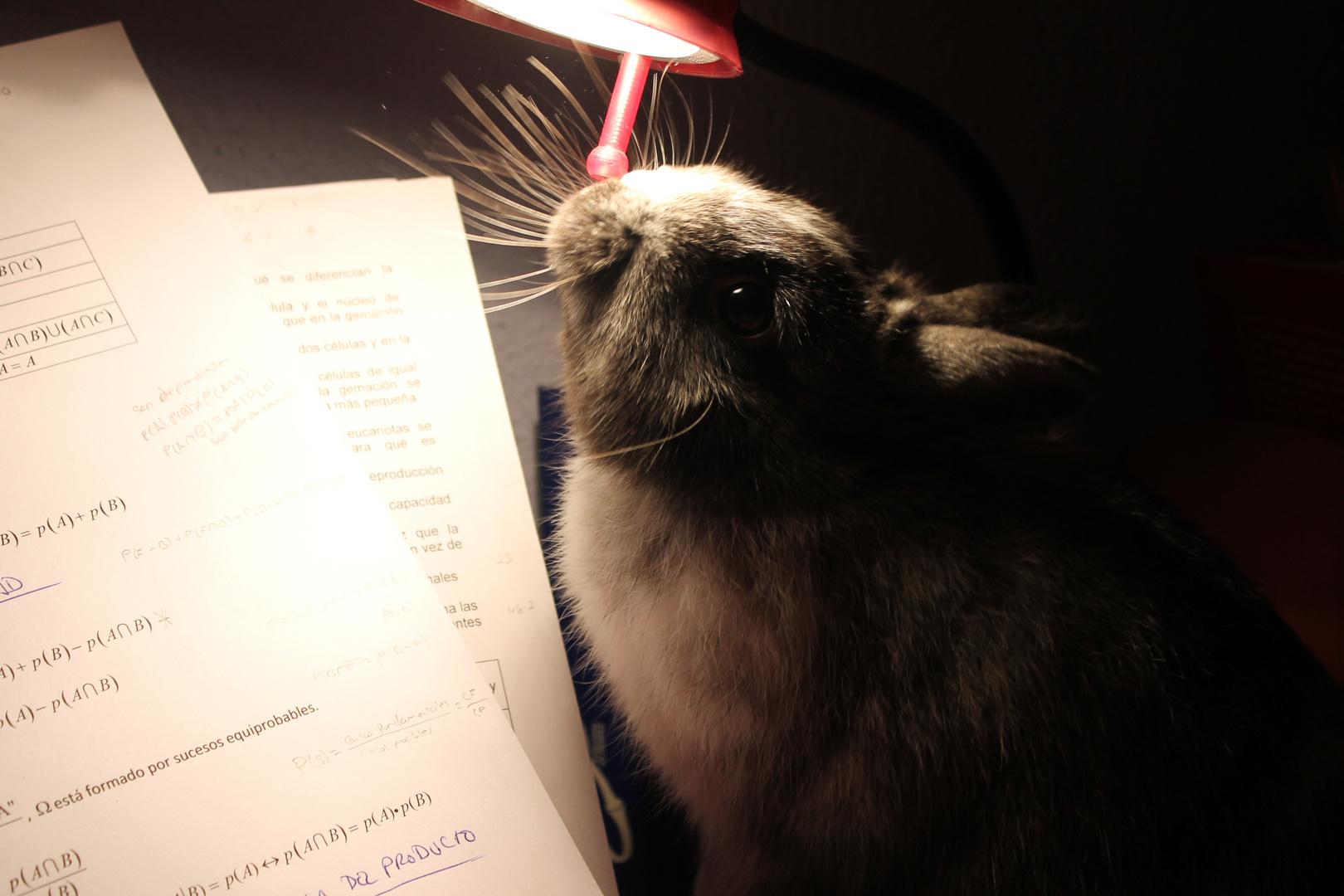 conejo y luz
