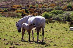 Connemara National Park Tierwelt 1
