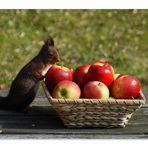 Conseil santé  1: une pomme par jour