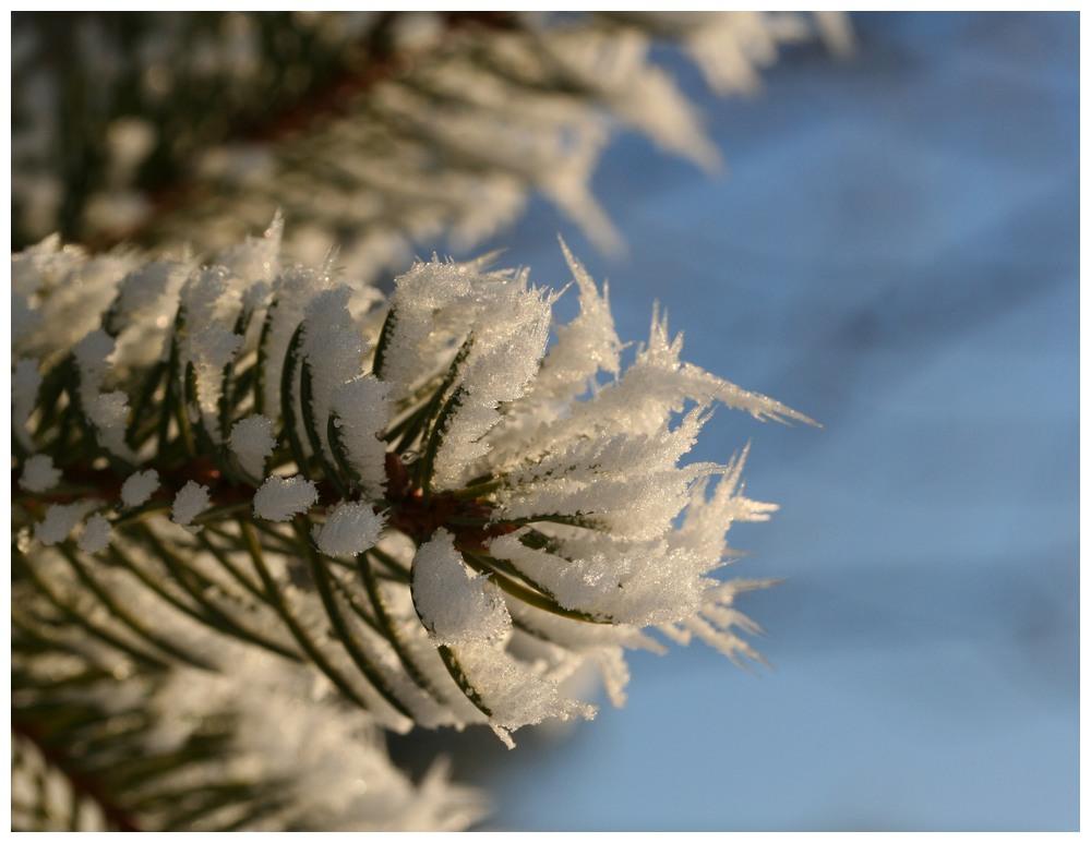 Conservation par le froid !!!