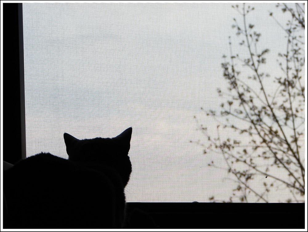 contemplazione del cielo