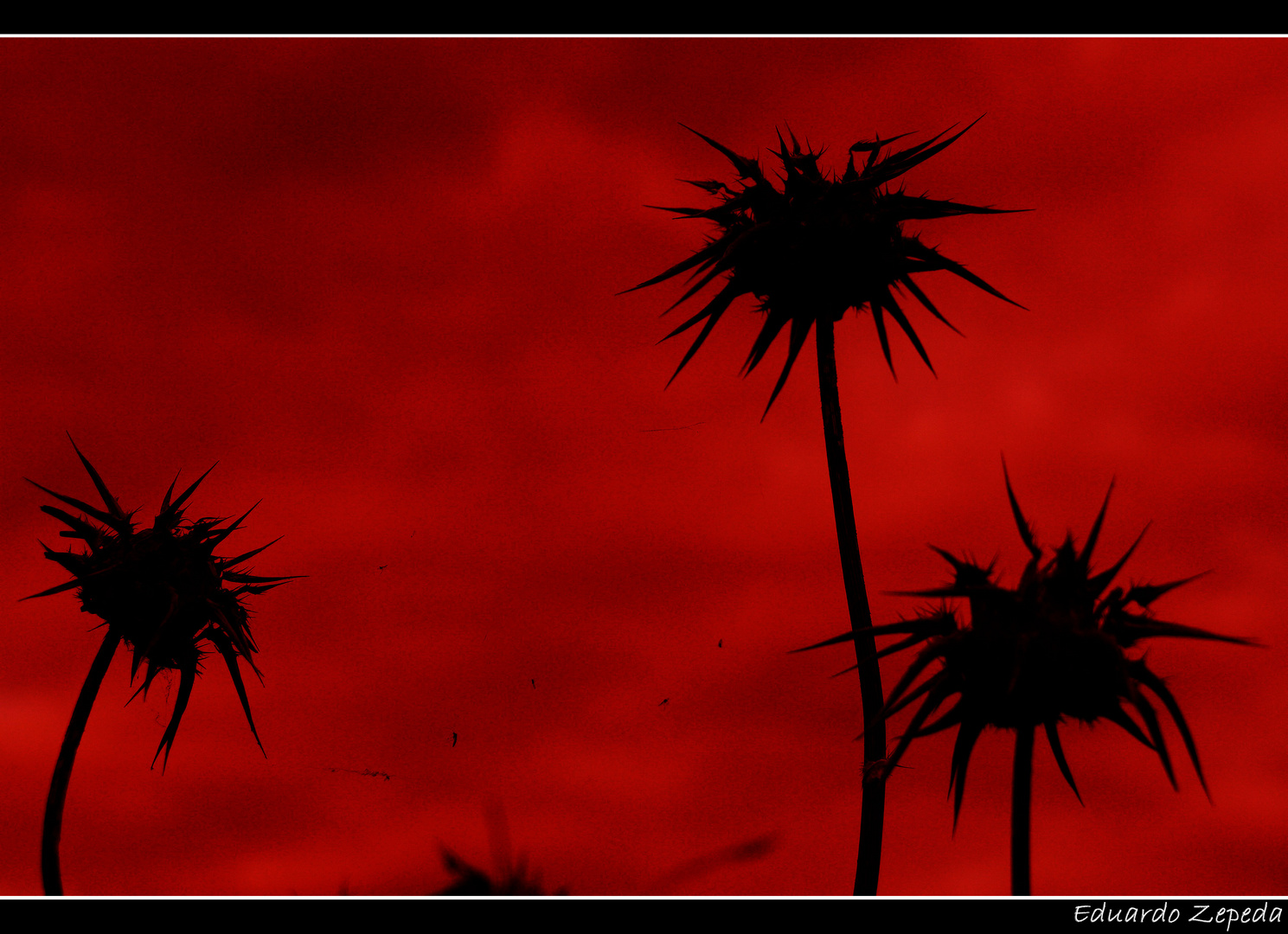 Contraluz al rojo