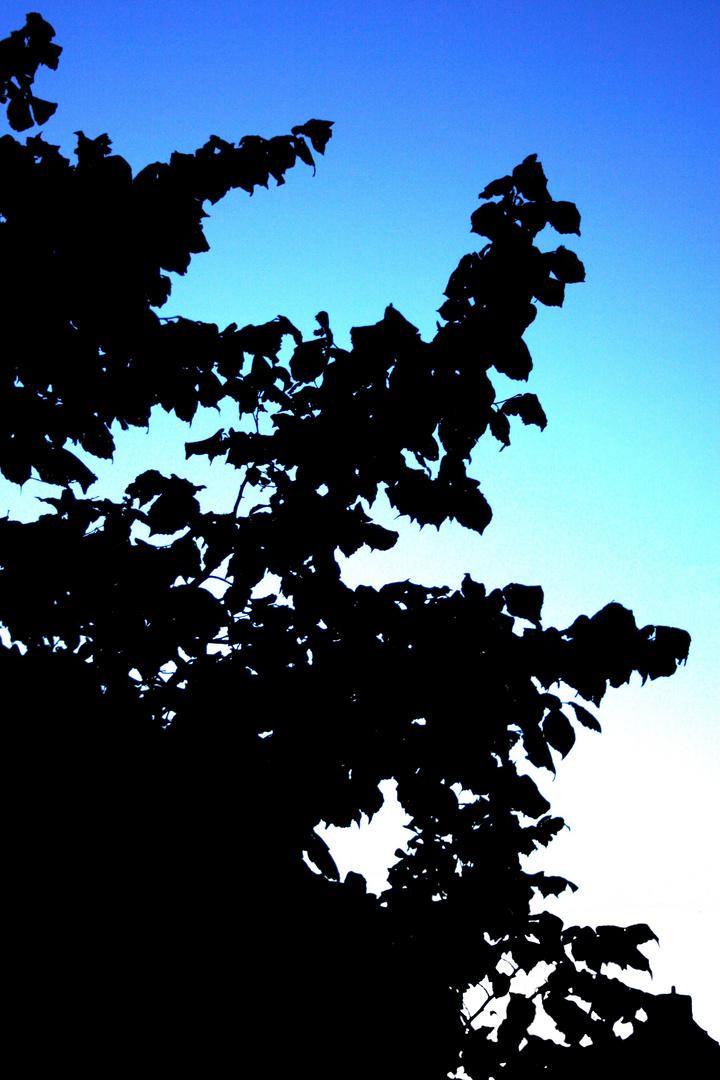 Cool dawn...