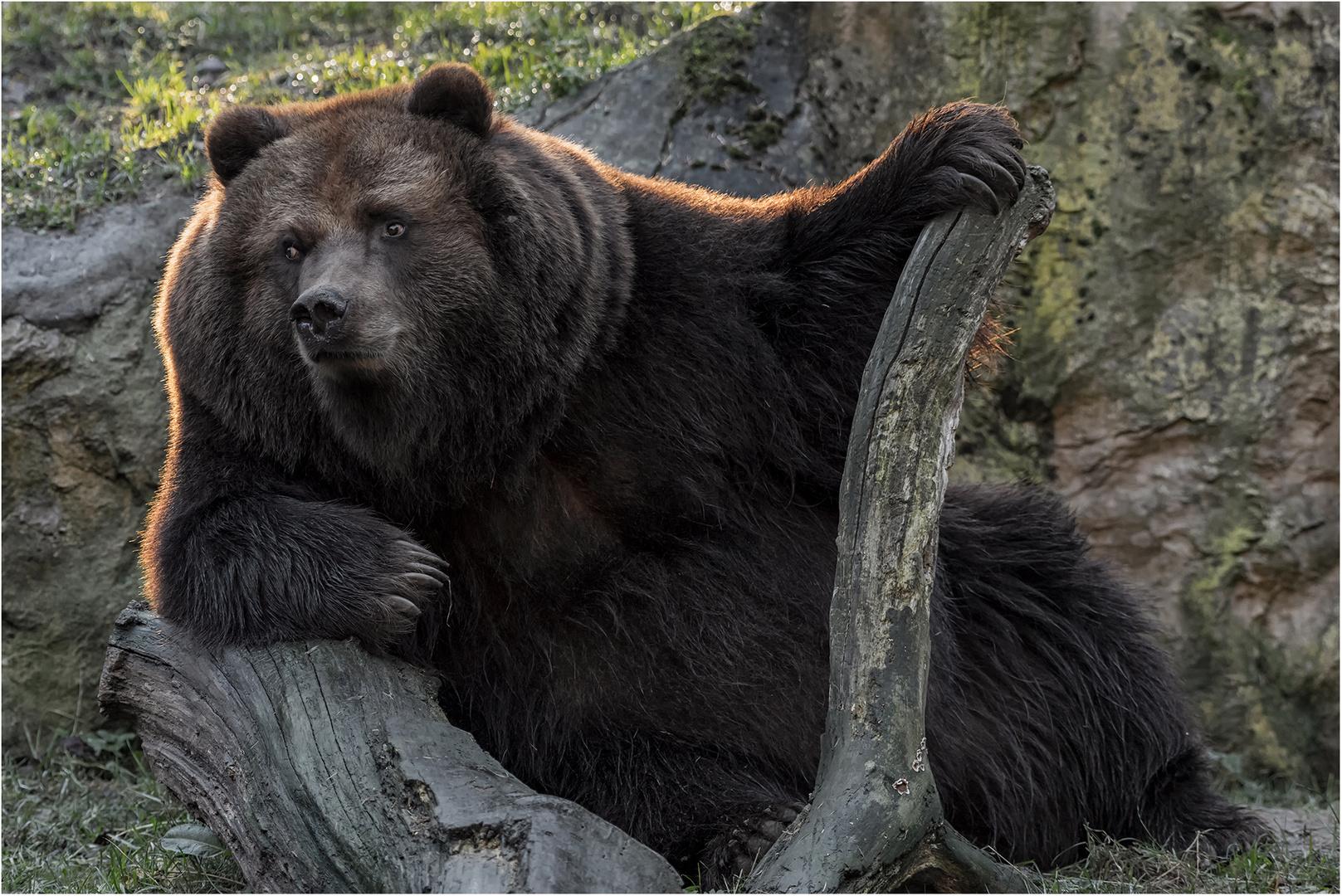 Coole Socke Foto Bild Bären Und Wölfe Bilder Auf Fotocommunity