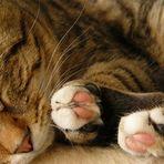 Coole Tiger-Socke