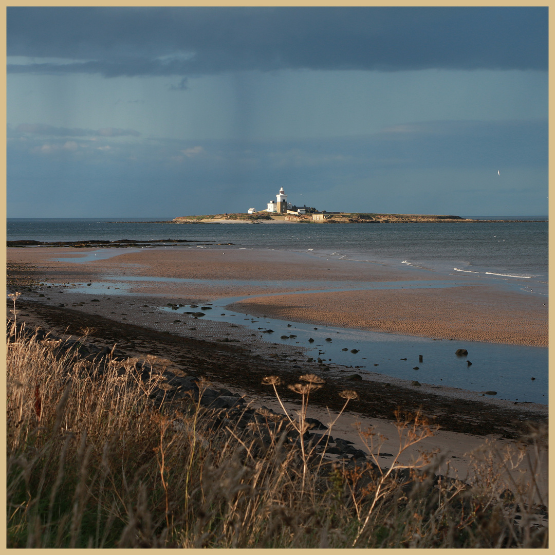 Coquet Island from the south 7