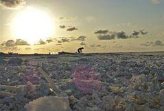 coral sunset working class hero