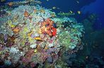 Coral Wonder - Maledives