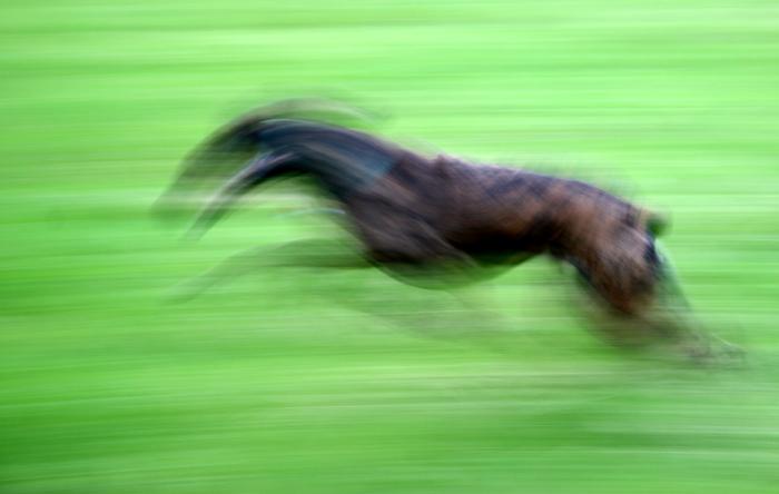 Corazon auf Speed