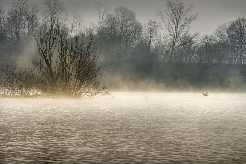 Cormorani nella nebbia 2