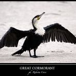 - cormorano comune -