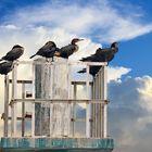 cormorans perchés