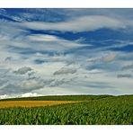 [cornfield]