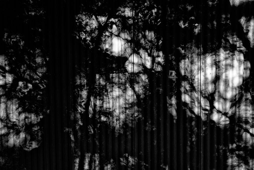corrugated iron.tree.shades