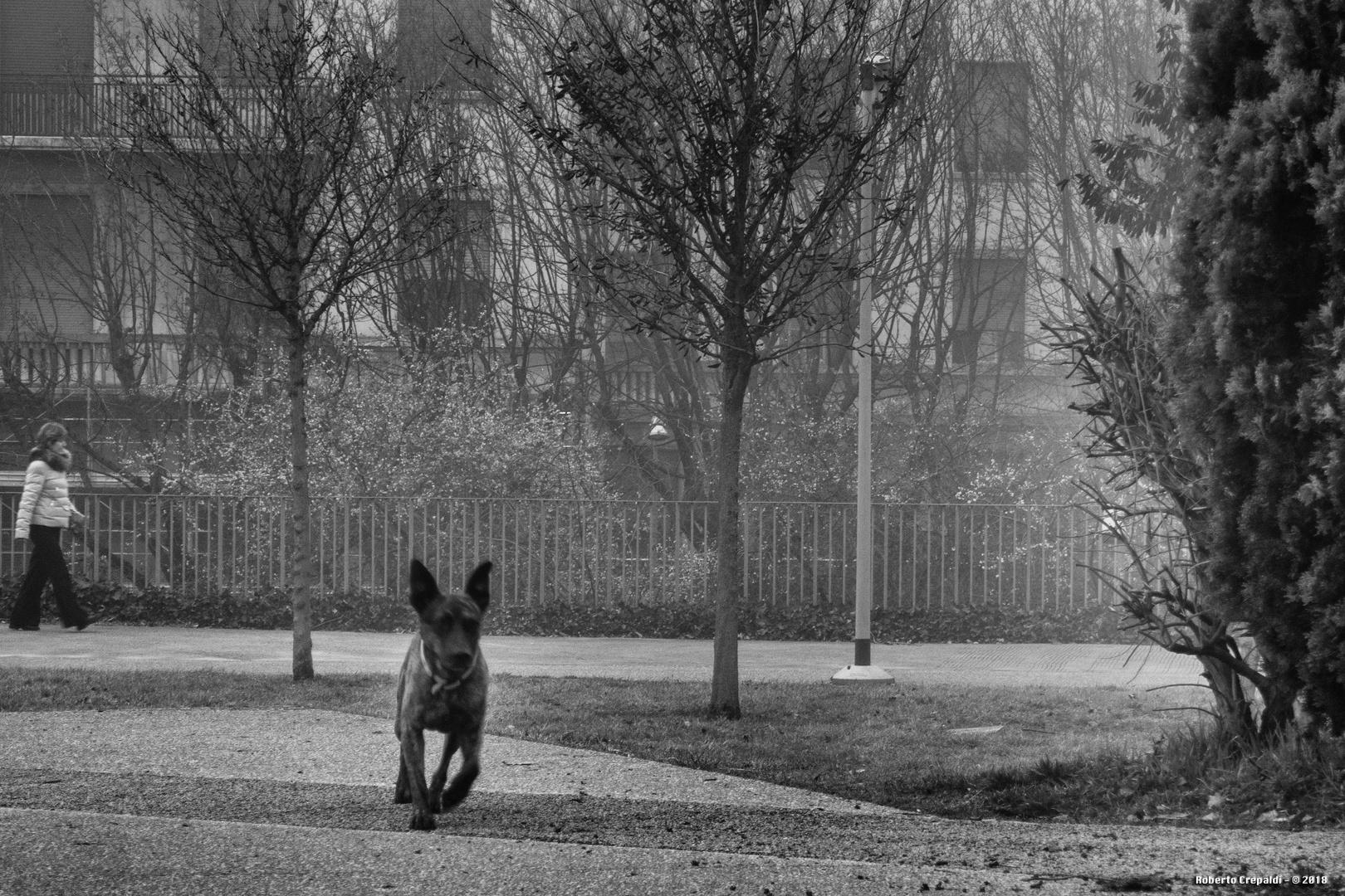 Corsa nel parco