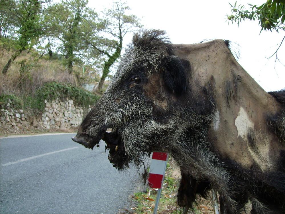 Corsica_3, 2007