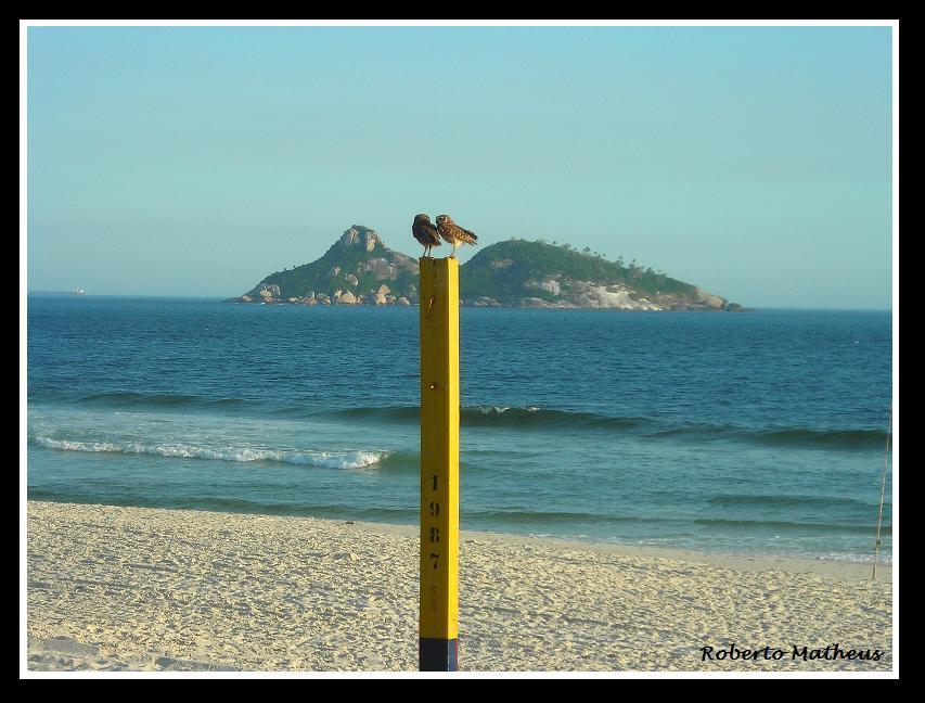 Corujas Cariocas na Praia!? - Cariocas Owls on the Beach!? / Series: Silhoettes of Rio.