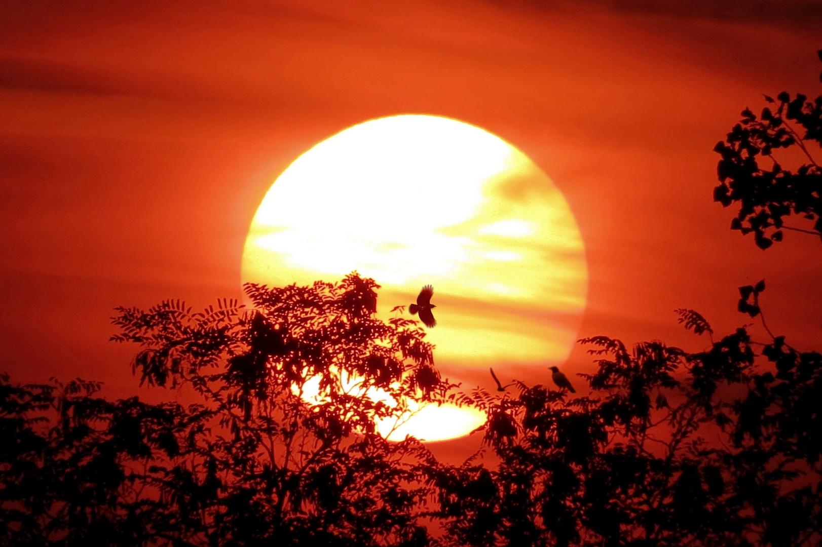 Corvi al tramonto