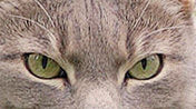 Cosmic Eyes