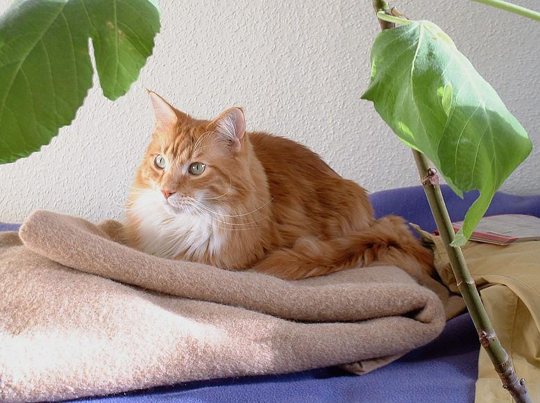 Cosmo unterm Feigenbaum