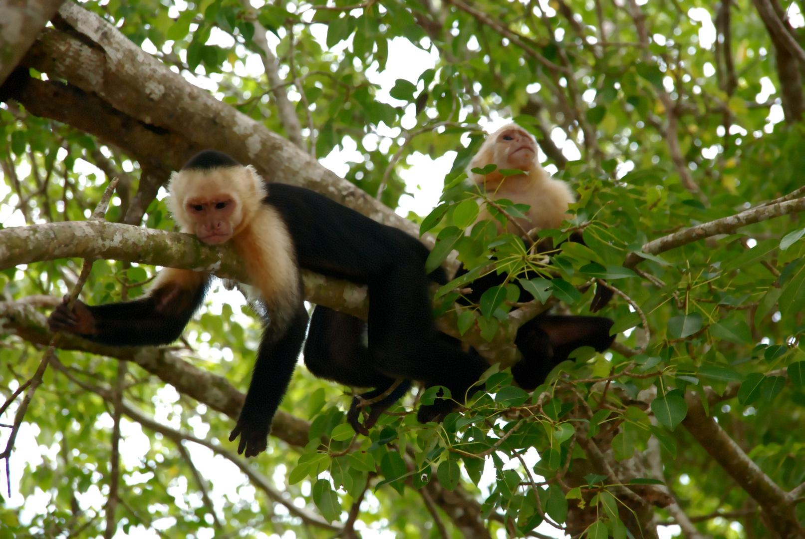 Costa Rica (8)