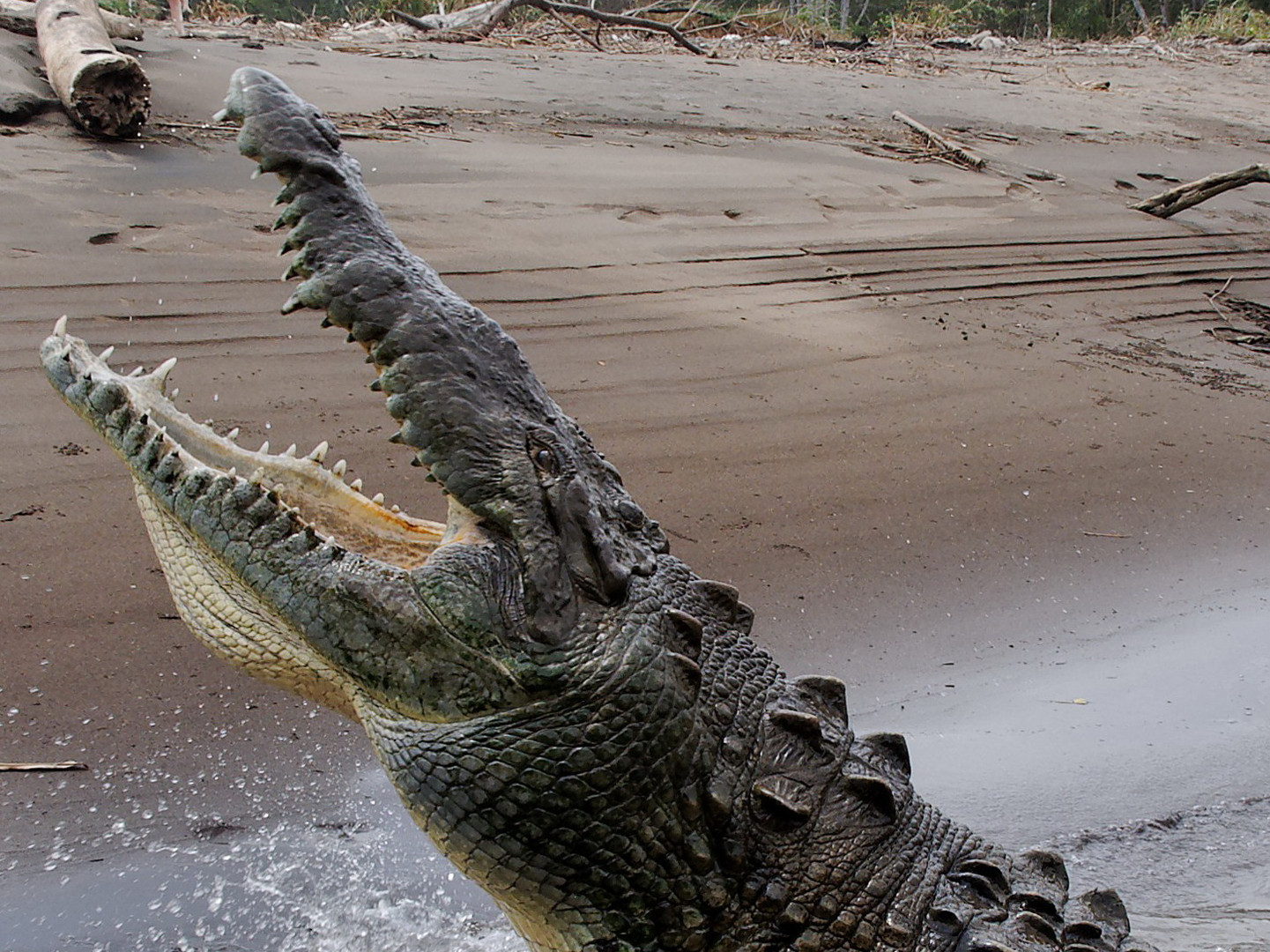 Costa Rica am Fluß Tarcoles