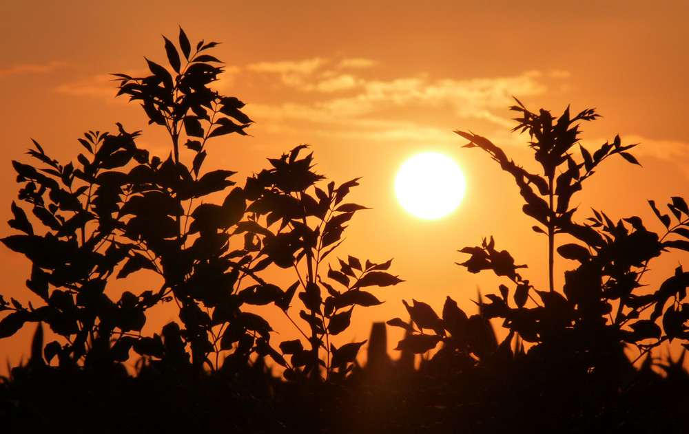Coucher de soleil au-dessus de la haie