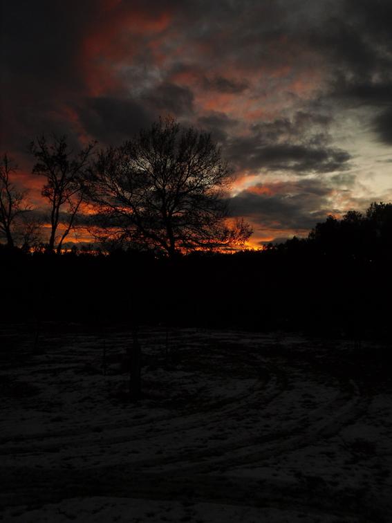 coucher de soleil entre les pins