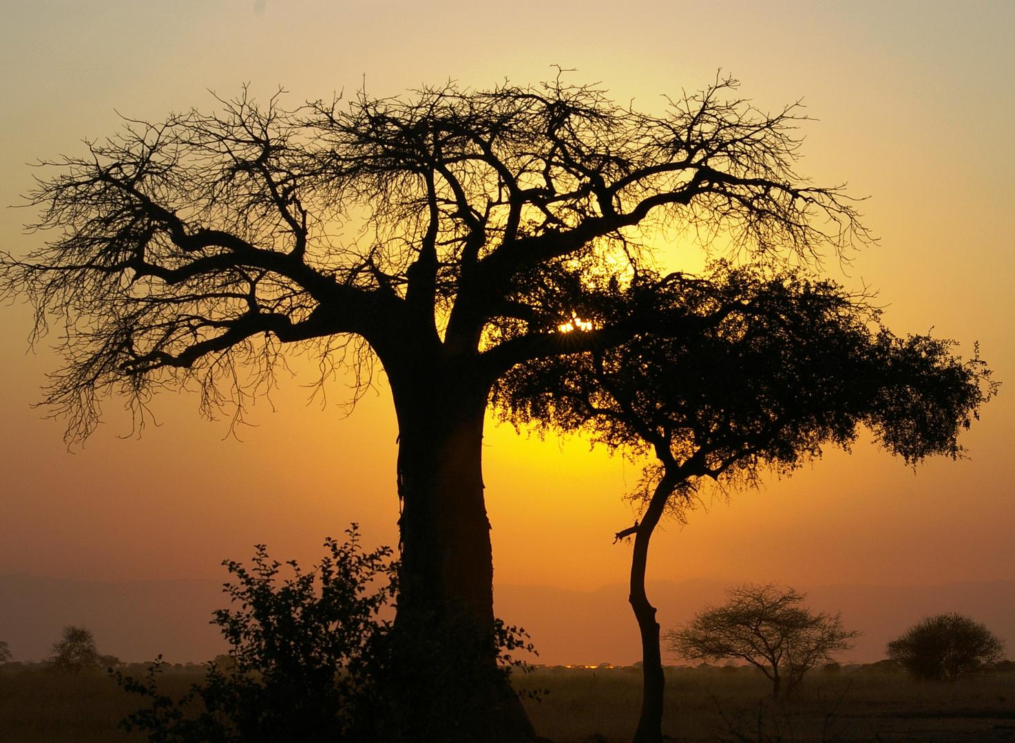 Coucher de soleil, parc du Tarangire, Tanzanie