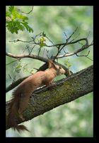Coucou petit écureuil