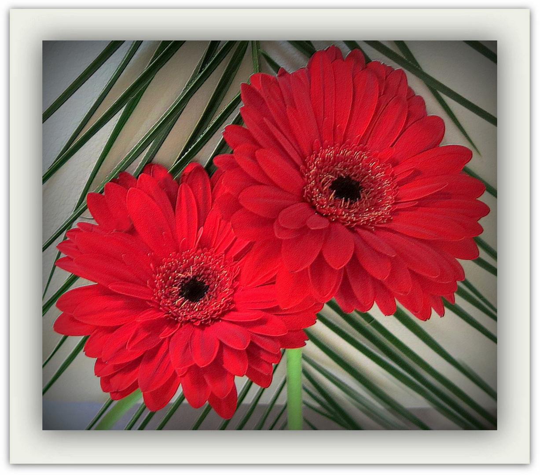 COULEUR..... photo et image | fleurs, nature, fleur Images fotocommunity