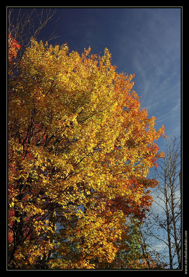 Couleur d'automne au Canada - Quebec - octobre 2007