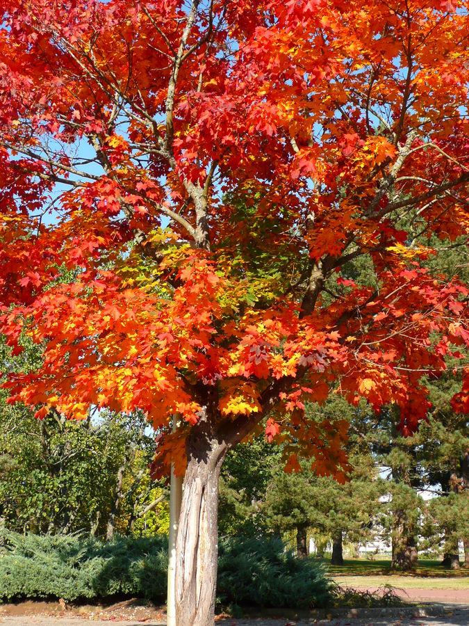 couleur de l'automne