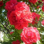 couleures d été....
