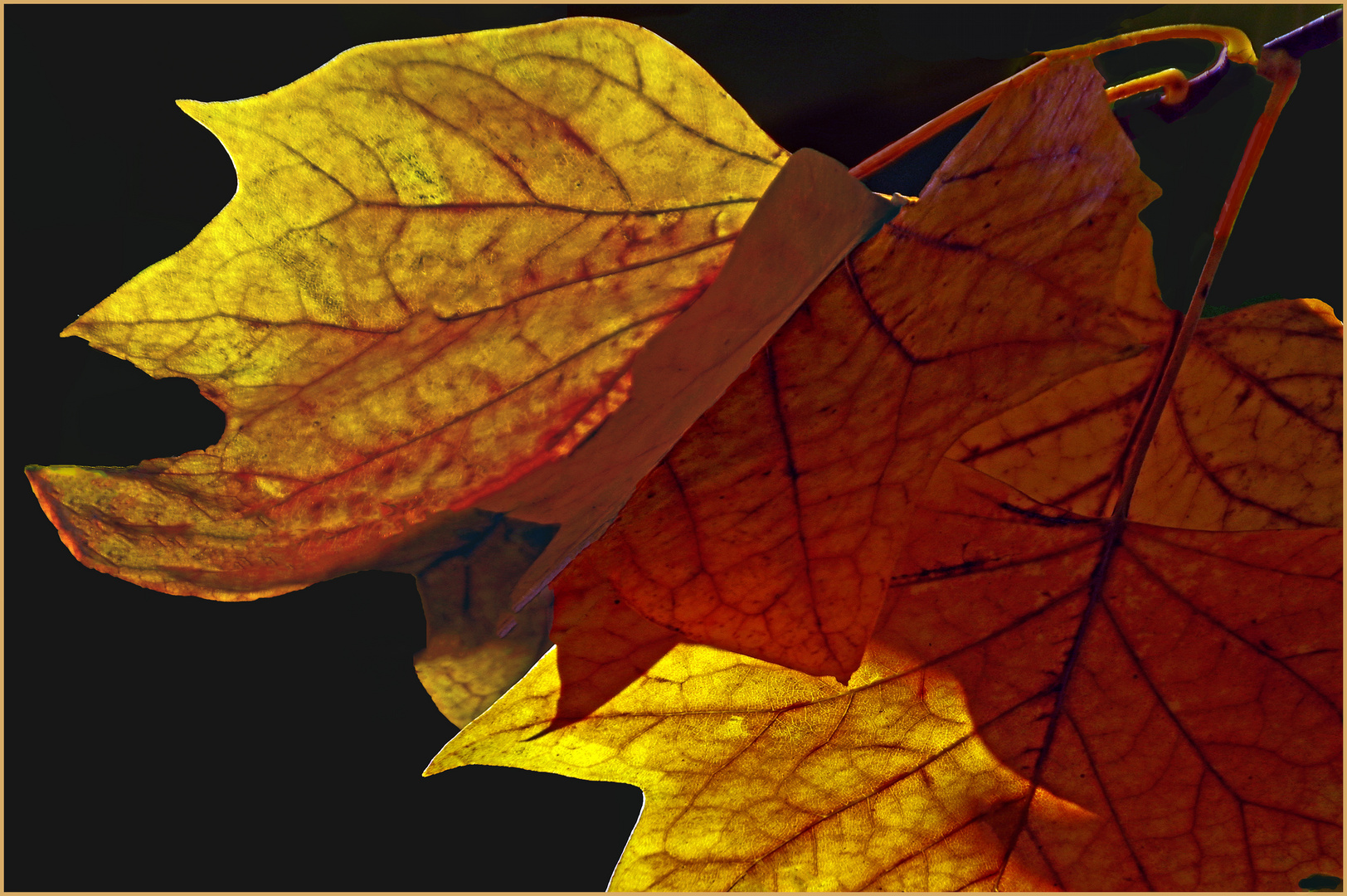 couleurs d automne..