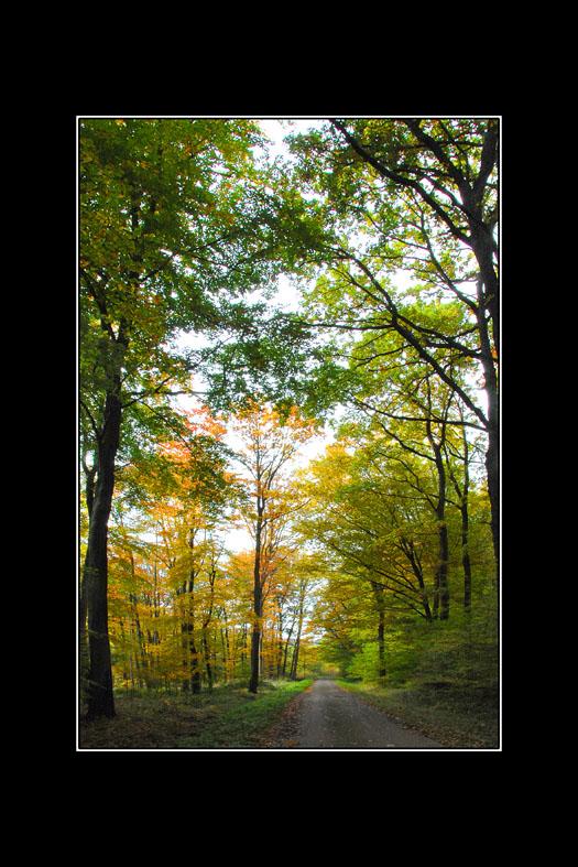 couleurs d'automne 04