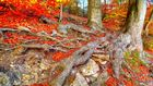 Couleurs d'automne - 2