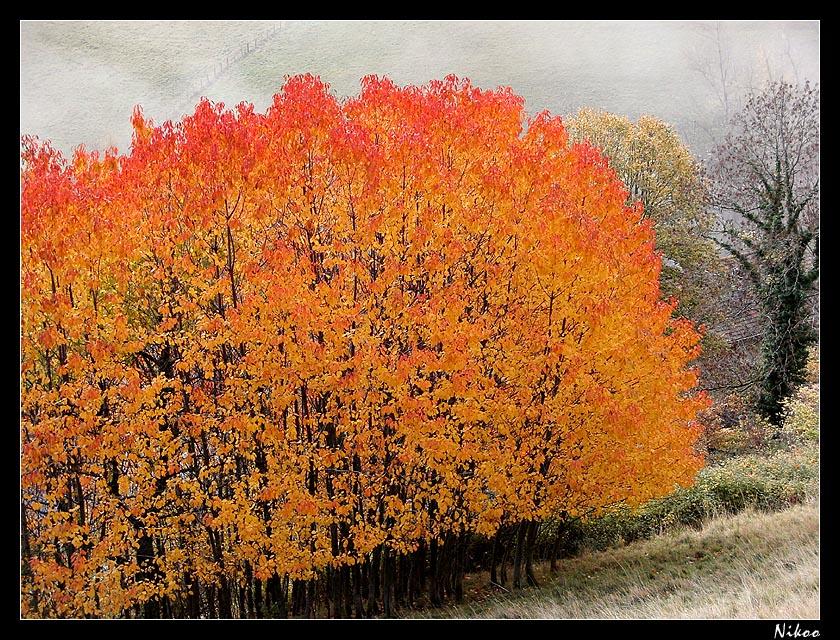 couleurs d'automne 3