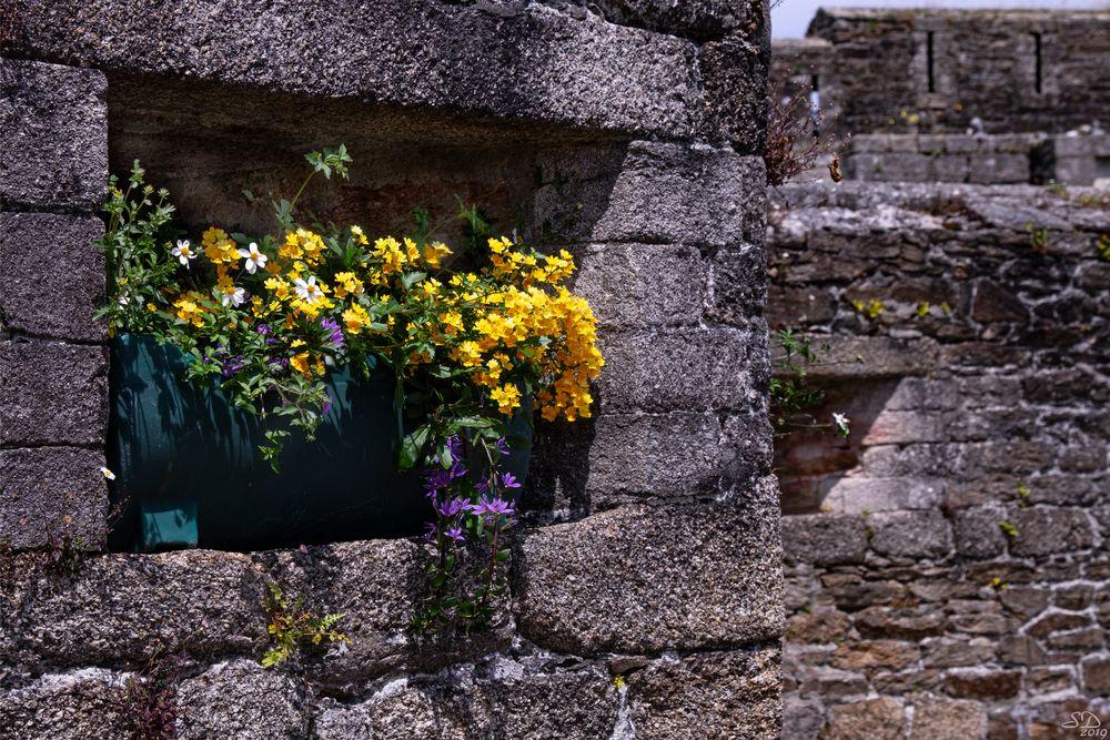 Couleurs de Bretagne (6) photo et image   france, nature ...