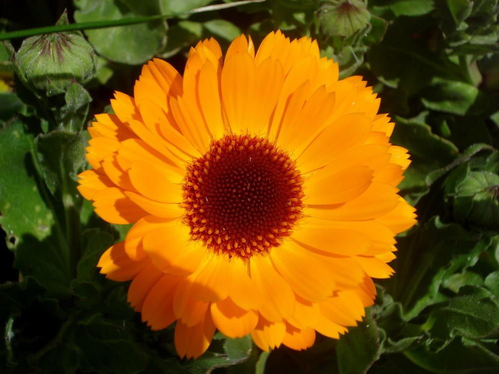 couleurs de printemps 2009 pointe de bretagne