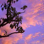 Couleurs d'un crépuscule -- Farben einer Dämmerung