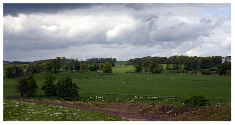 Countyside in Northumberland